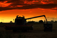 Harvest at sunset Royalty Free Stock Photo