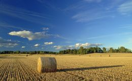 Harvest in Sweden. Beautiful harvest landscape in Sweden Stock Images