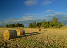 Harvest in Sweden. Beautiful harvest landscape in Sweden Royalty Free Stock Images