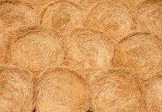 Harvest texture Stock Image