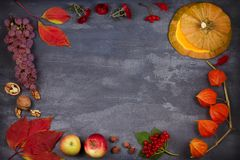 Harvest or Thanksgiving background. Thanksgiving Day food concept. Autumn fruits, vegetables, leaves and flowers. View from above, top, frame, copy space Stock Image
