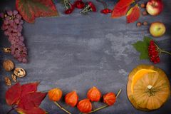 Harvest or Thanksgiving background. Thanksgiving Day food concept. Autumn fruits, vegetables, leaves and flowers. View from above, top, frame, copy space Royalty Free Stock Photos