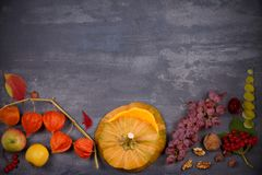 Harvest or Thanksgiving background. Thanksgiving Day food concept. Autumn fruits, vegetables, leaves and flowers. View from above, top, frame, copy space Stock Images