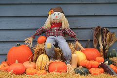 Harvest and Thanksgiving and Scarecrow Stock Photography