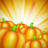 Harvest theme with pumpkins Royalty Free Stock Image