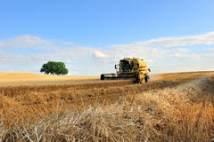 Harvest three. Harvest of grains in french Stock Photography