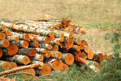 Harvest of timber. Royalty Free Stock Photography