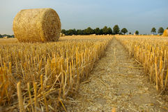 Harvest time. Hay bales on the field royalty free stock image