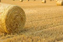 Harvest time. Hay bales on the field royalty free stock photography