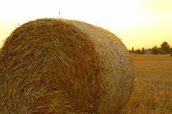 Harvest time. Hay bales on the field stock photography