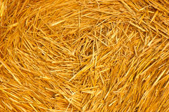 Harvest time. Hay bales on the field royalty free stock photo