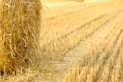 Harvest time. Hay bales on the field stock image