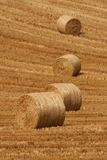 Harvest time. At the end of the irish summer, cork county Stock Photography