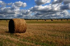 Harvest Time. Golden field and hay rolls on it Royalty Free Stock Photography