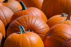 Harvest Time. Extreme close up of pumpkins Stock Photo