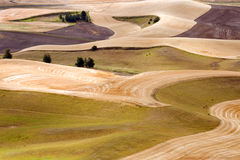 Harvest time. Palouse Hills crop fields at harvest time, Washington state Royalty Free Stock Photo
