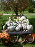 Harvest Time. A wagon full of squash,pumpkins,gourds are part of a great harvest season Stock Photos
