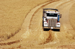 Harvest time 15. A farm truck with a load of wheat in the rolling hills of the Palouse area of southeastern Washington state, summer 2006 Stock Photos