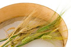 Harvest time - 2. Ripe ears in a sieve Royalty Free Stock Photography