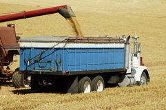 Harvest time 21. A combine harvesting the wheat crops in the rolling hills of the Palouse area of southeastern Washington state, summer 2006, unloading to a Royalty Free Stock Photos