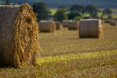 Harvest Time Stock Photos