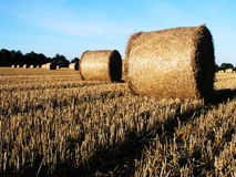 Harvest time. Hay rolls in a field at harvest time Royalty Free Stock Photo