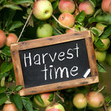 Harvest time. Blackboard, and text: Harvest time Royalty Free Stock Photo