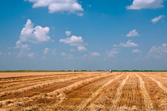 Harvest time. Combine harvester working in a wheat field Stock Photos