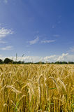 Harvest time. August is a harvest time Royalty Free Stock Images