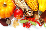Harvest time Royalty Free Stock Photo