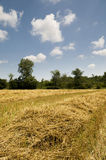 Harvest Time. Cut grain on a Ontario farm Stock Images