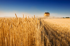 Free Harvest Time Stock Photography - 2943852