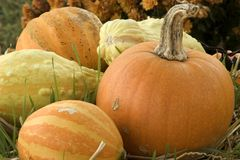Harvest Time. Pumpkin and various squash displayed in yard at Halloween Royalty Free Stock Image