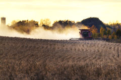 Harvest Time. A combine harvests a field of soybeans in the setting sun Royalty Free Stock Photos