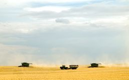 Harvest time 4. Combining crops, such as wheat or barley Royalty Free Stock Images
