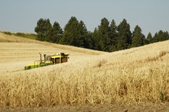 Harvest time 5. A combine harvesting the wheat crops in the rolling hills of the Palouse area of southeastern Washington state, summer 2006 Stock Photography