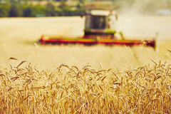 Free Harvest Time Royalty Free Stock Images - 58257689