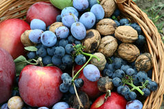 Harvest time. It's harvest time: apples, grapes, nuts, plums Stock Image