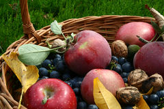 Harvest time. It's harvest time: apples, grapes, nuts, plums Stock Photo