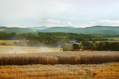 Harvest time. Combine on the golden field Royalty Free Stock Images