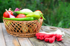 Harvest time. A basket of vegetables on a wooden table. Assorted colorful vegetables and herbs on the old wooden background , harvest time Royalty Free Stock Photo