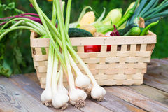 Harvest time. A basket of vegetables on a wooden table. Assorted colorful vegetables and herbs on the old wooden background , harvest time Stock Photos