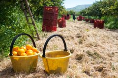 Harvest time Stock Photography