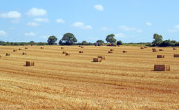 Harvest time. Corn stubble and bales of straw. Royalty Free Stock Images