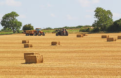 Harvest time. Corn stubble and bales of straw. Stock Photo