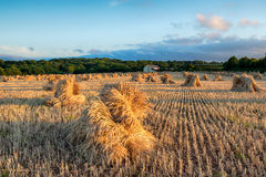 Harvest Time in Devon Royalty Free Stock Photography