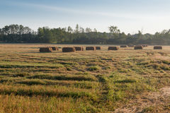 Harvest Time Farmers Field Hay Bales. Seasons are changing its harvest time in the fields. Farmers hay bales in autumn, trees and blue skies in the background Royalty Free Stock Images
