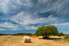 Harvest time Royalty Free Stock Photos