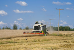 Harvest time. A harvester working in a filed Stock Photos