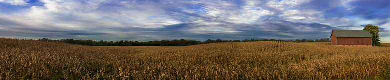 Harvest Time in Indiana. Panoramic of cornfield and barn at harvest time in Indiana stock photos